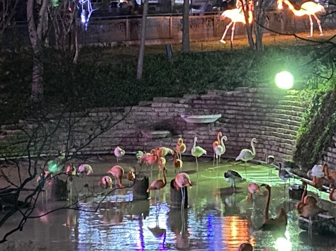 Zoo Lights At Dallas Zoo Experience